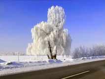 Snow queen in the field by the road royalty free stock photos