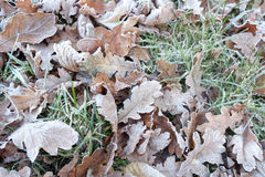 Frosty Woodland leaves Royalty Free Stock Photography