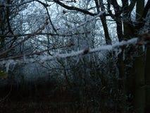 Frosty woods Stock Photos