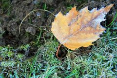 Frosty yellow leaf Royalty Free Stock Photography