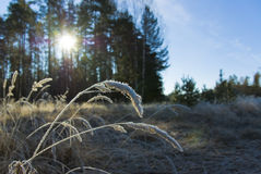 FrostySun Stock Photography