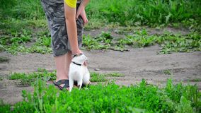 Frotaciones del gato siamés contra las piernas adolescentes de los muchachos metrajes