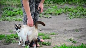 Frotaciones del gato siamés contra las piernas adolescentes de los muchachos almacen de metraje de vídeo