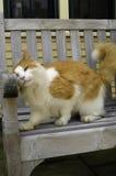 Frotamiento anaranjado del gato en banco Imagenes de archivo