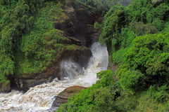 Frothy Murchison Falls Uganda. The powerful and frothy waters of Murchison Falls Uganda Stock Photography