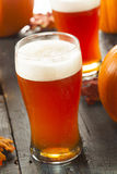 Frothy Orange Pumpkin Ale. Ready to Drink Stock Photography