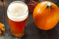 Frothy Orange Pumpkin Ale. Ready to Drink Royalty Free Stock Images