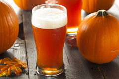 Frothy Orange Pumpkin Ale. Ready to Drink Royalty Free Stock Photos