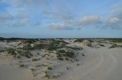 Frottez l'élevage dans les plages blanches de sable d'Aruba Photos stock