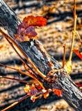 Frottez la branche et la feuille de chêne dans la forêt de montagne Photos stock