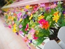 Frower. Frower, colorful, resort, day, beautiful stock photography