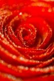 frower падений предпосылки вода глубокого красная розовая Стоковая Фотография