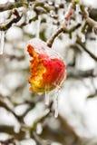 Froze apple Stock Photo