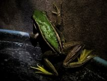 Froze the frog family Has a beautiful green color. Froze frog family has beautiful green color stock photos