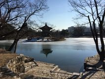 Froze pond Royalty Free Stock Photo