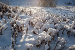 Frozem meadow Stock Photography