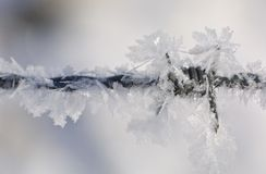 Frozen Stock Photography