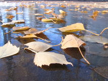 frozen Fotografia Stock