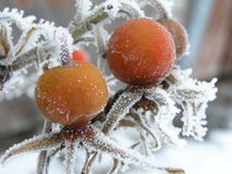 Frozen. OLYMPUS DIGITAL CAMERA stock photography