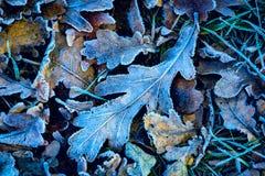 Frozen abstarct oak leafage Royalty Free Stock Photos