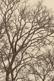 Frozen abstract tree branches and grass - aged photo Royalty Free Stock Photography