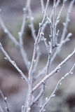 Frozen abstract tree branches and grass Royalty Free Stock Images