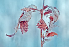 Frozen abstract tree branches and plants in winter snow Royalty Free Stock Image