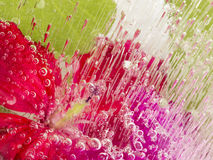 Frozen abstraction with red flower Stock Photos