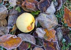 Frozen apple on fallen leaves Royalty Free Stock Photos