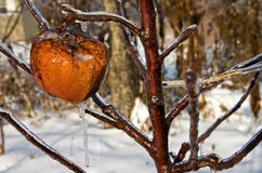 Frozen Apple Royalty Free Stock Images