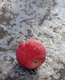 Frozen apple on ice Royalty Free Stock Images