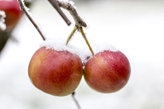 Frozen Apple Royalty Free Stock Photo