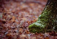 Frozen autumn Stock Photo