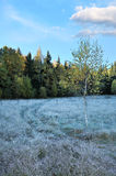 Frozen autumn landscape Royalty Free Stock Photography