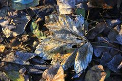 Frozen autumn leafage. Abstract natural background Royalty Free Stock Images