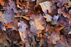 Frozen autumn leafs. Abstract natural background Royalty Free Stock Photo