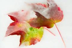 Frozen Autumn leaves Stock Photos