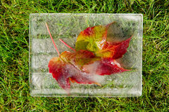 Frozen autumn leaves. Frozen in ice autumn leaves and a green grass Royalty Free Stock Photo