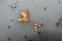 Frozen Autumn Leaves Royalty Free Stock Photos