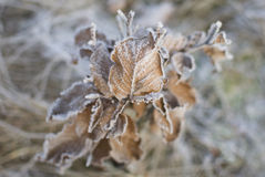Frozen autumn leaves Stock Image