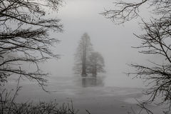 Frozen Bald Cypress Trees Framed by Branches. Bald Cypress trees frozen in ice and framed by branches on a foggy morning at Stumpy Lake in Virginia Beach Royalty Free Stock Photo