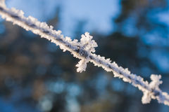 Frozen barbed wire. Shoot of frozen barbed wire in the sun Stock Photo