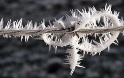 Frozen barbed wire Stock Photos