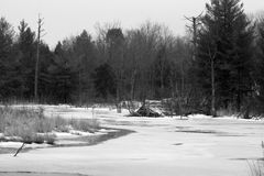 Frozen Beaver Pond. A beaver lodge sitting in the silence of a frozen pond Stock Photography