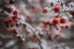 Frozen berries Stock Photos