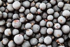 Frozen berries of black currant Stock Photography