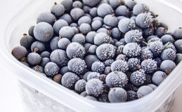 Frozen berries. Frozen berries of black currant in the container on the table Stock Photo
