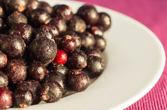 The frozen berries of black currant on a white plate Stock Photos