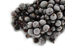 Frozen berries blackcurrant closeup Stock Image