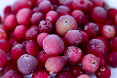 The frozen berries of a cowberry Stock Images